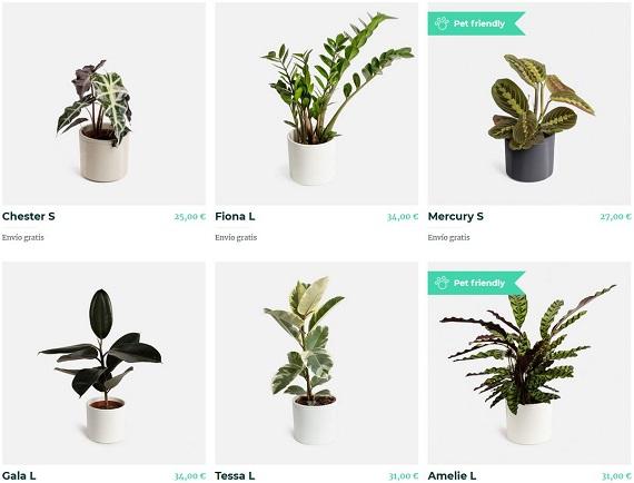colvin plantas